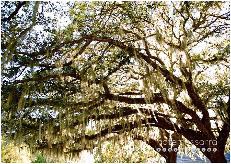 Varner Hogg Plantation Wedding Spanish Moss